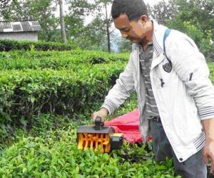 隆阳茶园机械化运作演示
