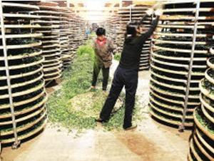 隆合茶业融资开发有机茶业