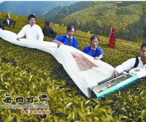 广西:工作人员进行茶叶机械化采摘操作演示