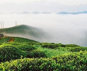陕西茶俗的西部风情