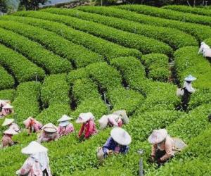 """首届""""海峡两岸茶文化季""""活动启动啦"""