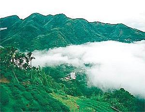 走进台湾 探寻阿里山茶之道