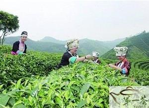 湘黔侗族茶俗:打油茶