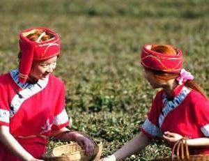 鄂西土家族的茶文化