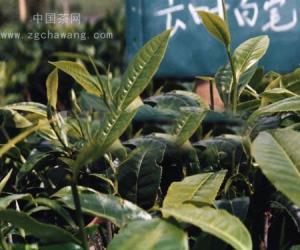 普洱茶四大产区