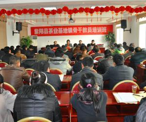 紫阳县茶产业万人技能培训拉开帷幕