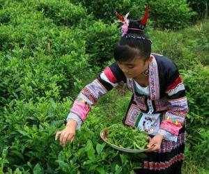 女子传统茶俗文化