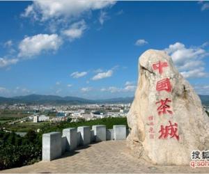 云南省最大的生态茶园 营盘山茶区