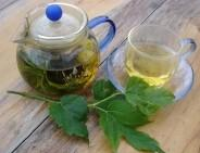 益肾精补肾阳――锁阳桑椹茶