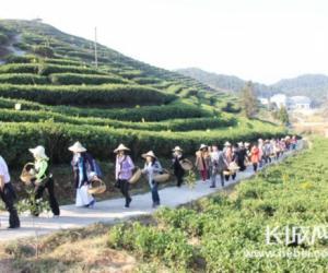 河北省茶文化代表团赴福建太姥山考察白茶生产