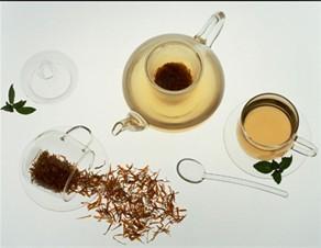中医师表式金银花煮茶能抑制肿瘤生长