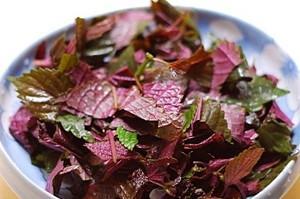紫苏茶散寒解表 冬季感冒后饮用效果佳