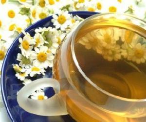 治疗眼疾 四种清茶帮你治愈