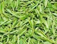 六安瓜片是什么茶,六安瓜片的简介