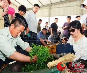 """日照""""百里绿茶长廊""""生态游点亮中国旅游日"""