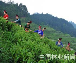 大塘:新建茶厂加速茶叶深加工发展