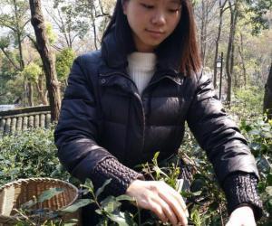 大四女生暑假创业忙,一年卖掉2万多斤茶叶